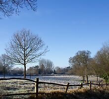 Country Scene in Winter by Sue Robinson