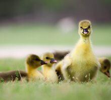 gosling by Cara Johnson
