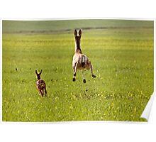 Mule Deer doe and fawn bounding through Saskatchewan field Poster