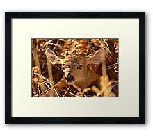 Newly born fawn hiding in a Saskatchewan field Framed Print