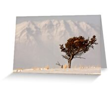 Lone tree on High Plains with Rocky Mountains in distance Greeting Card