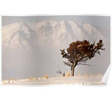 Lone tree on High Plains with Rocky Mountains in distance Poster