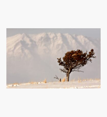 Lone tree on High Plains with Rocky Mountains in distance Photographic Print
