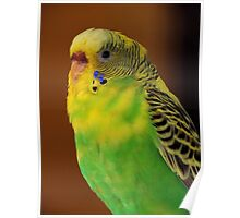 Parakeet ~ Part Two Poster