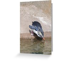 Diving Rockhopper Penguin Greeting Card