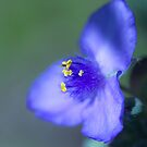 Blue Jewel by Jonicool