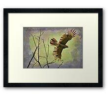 Hawk On The Hunt Framed Print