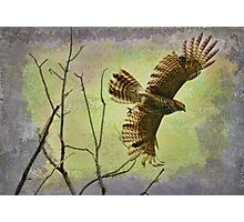 Hawk On The Hunt Photographic Print