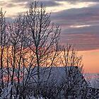Frosty Prairie Sunrise by Tjfarthing