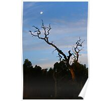 as the sun falls the moon arises Poster