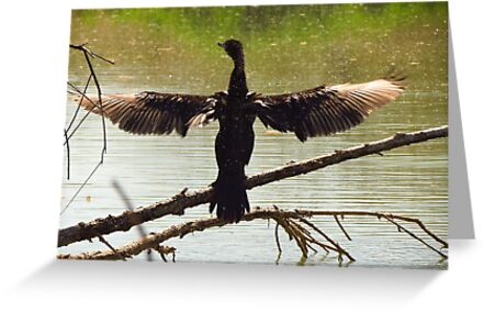 Neotropic Cormorant ~ Drying Off by Kimberly Chadwick