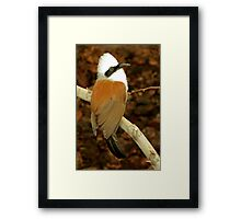 White-crested Laughing Thrush  Framed Print