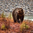 Kootenay Grizzly by JamesA1