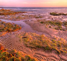 Intertidal. by Bette Devine