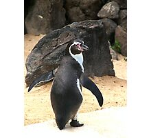 Penguin Shot Photographic Print