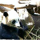 Panda Eating More Bamboo by Infinite2000