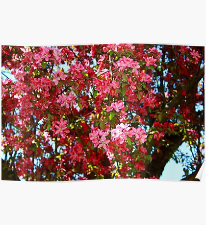 Spring Blossoms III Poster