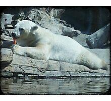 Polar Bear Eating Carrot Photographic Print