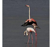 Ballet!! Photographic Print