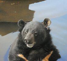 Bear Enjoing water by Arvind Singh