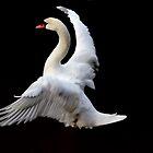 Flying Goose in Black background.. by Arvind Singh
