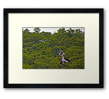 Bird Fight Framed Print
