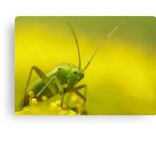 yellow and green bug Canvas Print