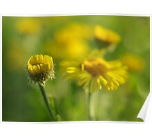 Yellow flowers on a sunny day Poster