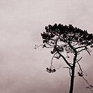 Tree by Anne Staub