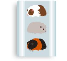 Guinea Pig Trio Canvas Print