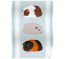 Guinea Pig Trio Poster
