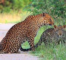 Leopard affection! by jozi1