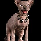 Sphynx Cat by JacoWiid
