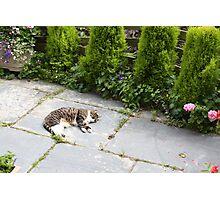 Cat Sleeping Photographic Print