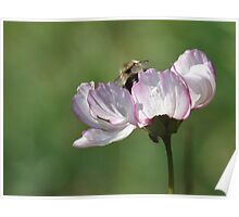 Happy Bee, Be Happy Poster
