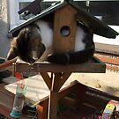 Cat eating bird food ? by ElsT