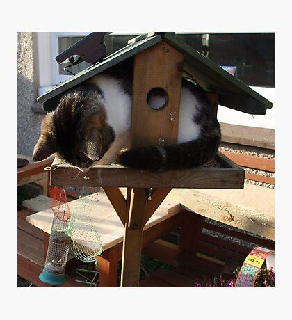 Cat eating bird food ? Photographic Print