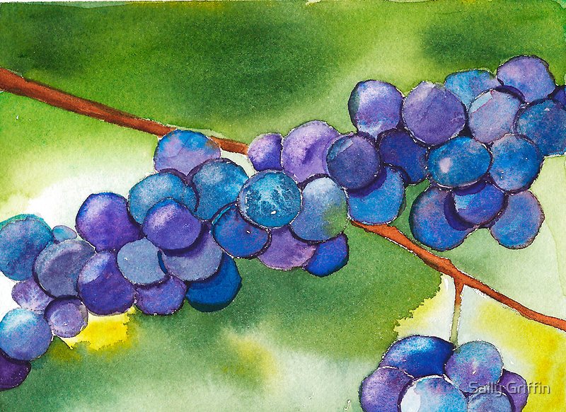 Grapes by Sally Griffin