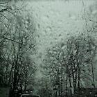Frozen Wilderness by Terry Schock