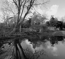Tree Reflecions by lanesloo