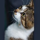Cat by flashcompact