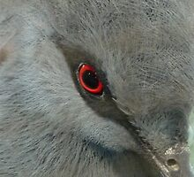 RED - EYE by Marilyn Grimble