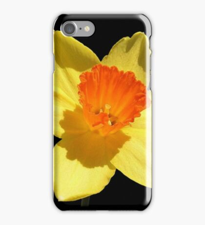 Spring Daffodil Isolated On Black iPhone Case/Skin
