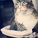 Kitty in the Basket by Kimberly Palmer