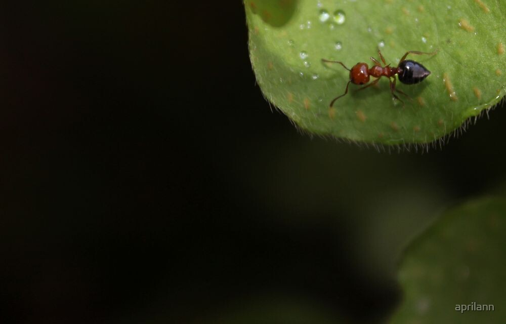 Ant in the Garden by aprilann