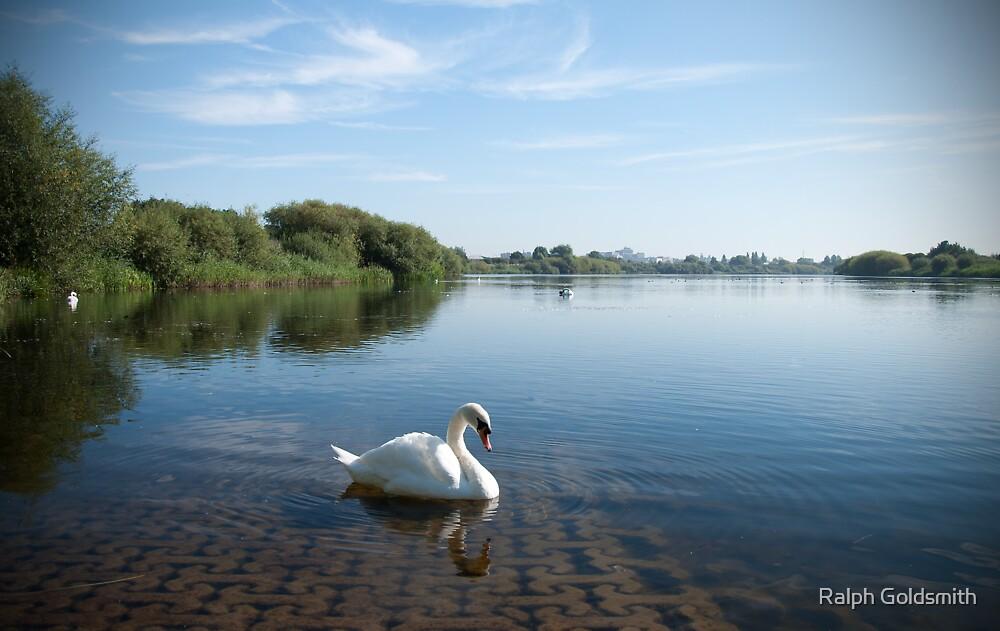 Swan on Duston Mills Reservoir in Northampton by Ralph Goldsmith