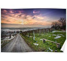 Vineyard at sunset in winter season photo Poster