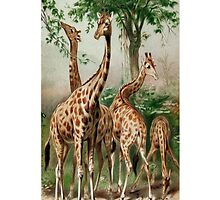 Giraffe Vintage Illustration iPhone iPod Case by wlartdesigns