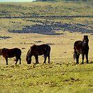 Dartmoor ponies by Shiva77