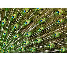 blue Peacock feather Abstract Photographic Print